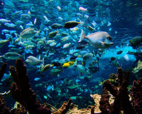 L'aquarium de la cité de la mer de Cherbourg