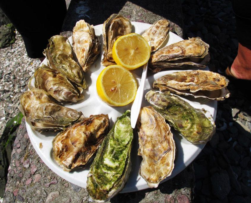 Degustation d'huîtres sur le port de Cancale