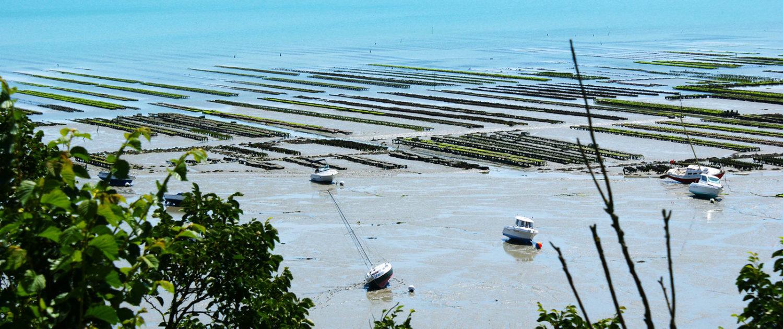 Parcs à huîtres dans la baie de Cancale
