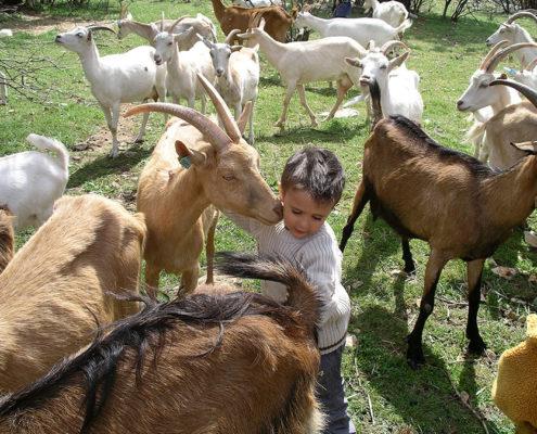 Enfant à la ferme pédagogique