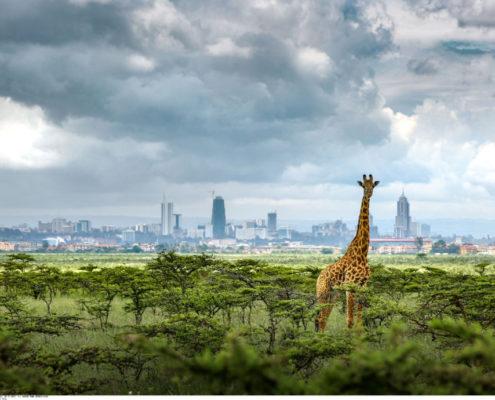 Nairobi, la ville est une jungle