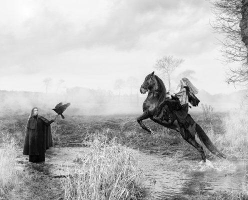 Les chevaux bretons face à l'homme