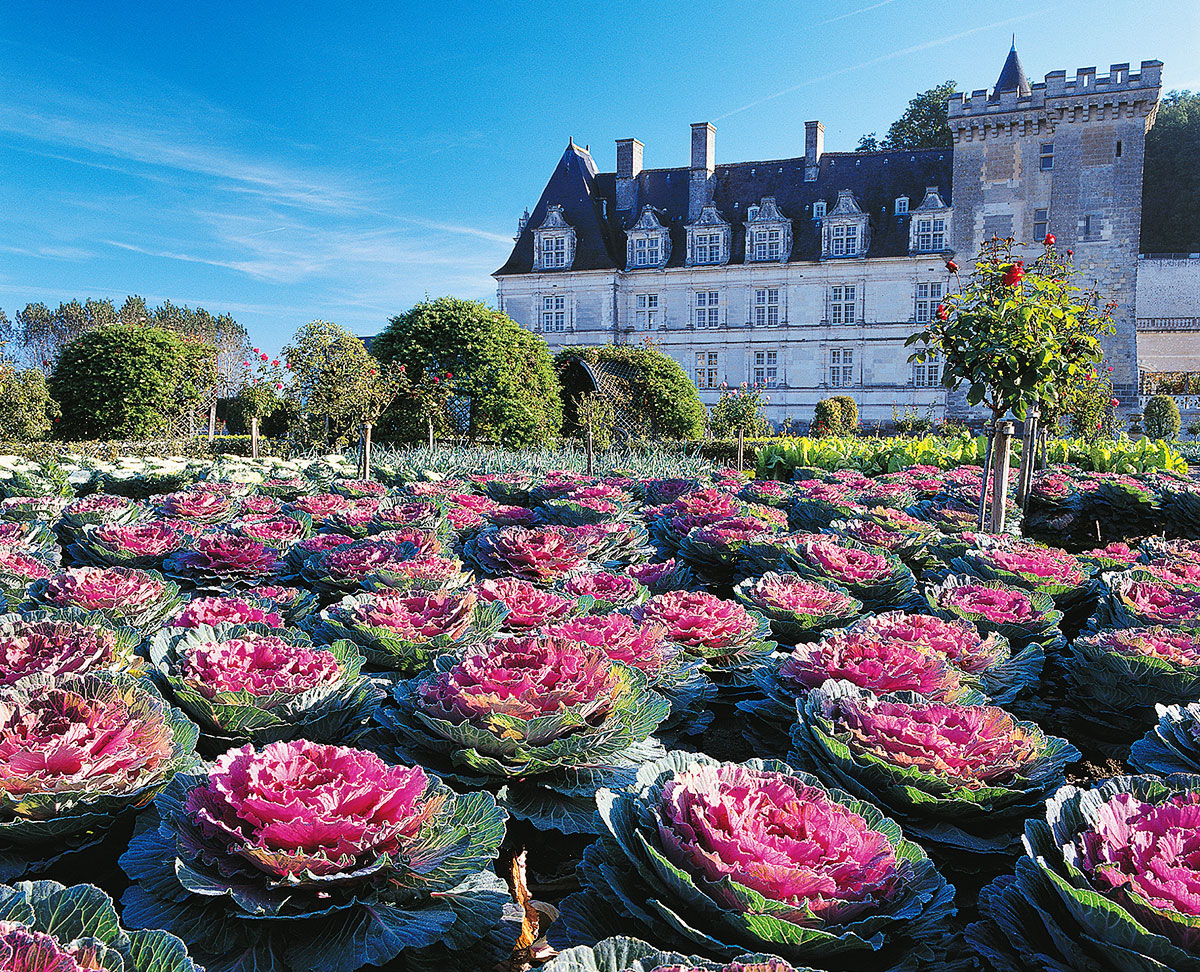 Les jardins potagers du Château de Villandry